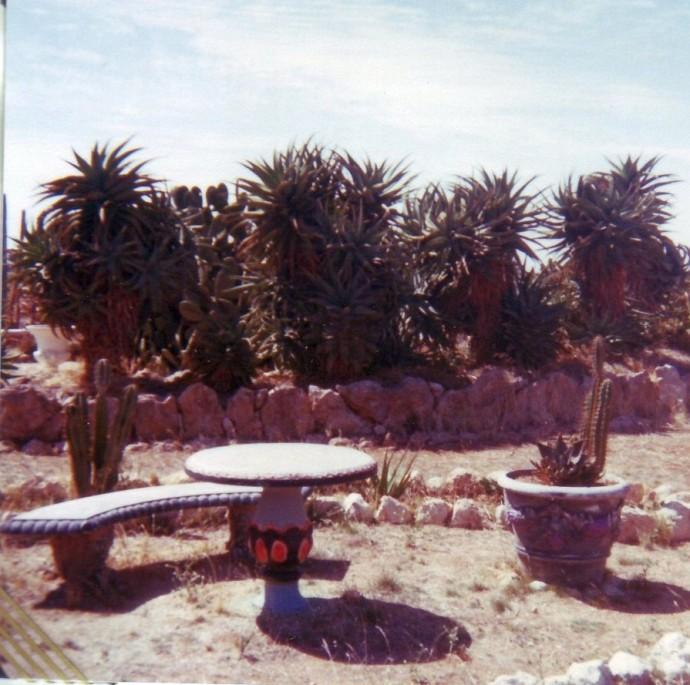 arizona-cactus-ranch-cactus-ranch-cactus-garden-jo11[1]